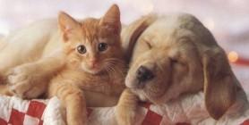 La protezione per il cane il gatto
