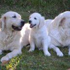 Risarcimento danni per morso di cane: calcolo e quantificazione