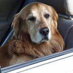 Responsabilità e risarcimento per danni da animali domestici