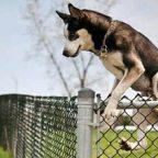 Danni provocati dal cane che scappa: chi paga?
