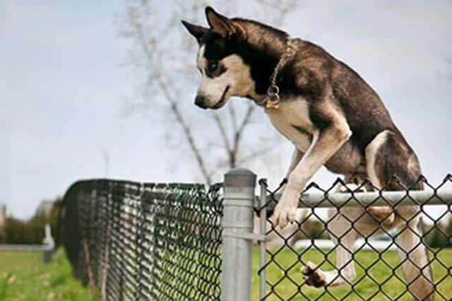 cane che scappa di casa