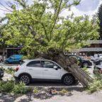 Risarcimento dei danni provocati dalla caduta di alberi e rami